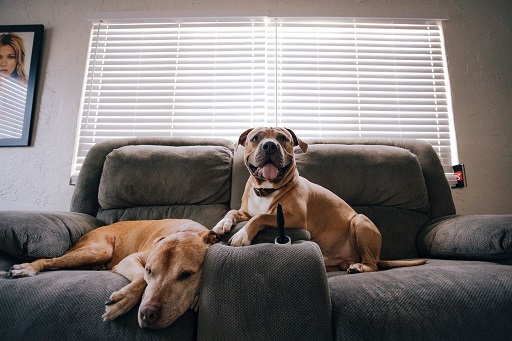 How To Keep Your Home A Healthy Place For Living 5 Keep pets to a minimum - Copy