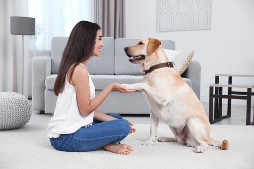 How To Keep Your Home Conservatory Safe and Secure 4 Having a dog - Copy