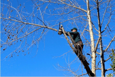 Things to Burglar Proof Any Home 2 trim your tree - Copy