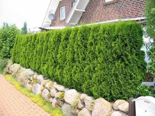 3 Proven Ways to Increase the Privacy of Your Home 4 Trees and shrubs