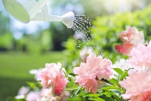 How to Easily Find Everything for Your Garden 5 watering can