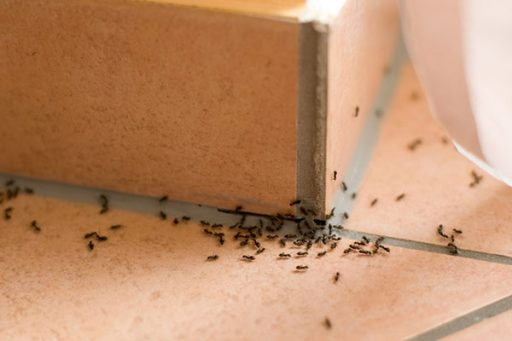 How to Keep Pests Away From Your House ants