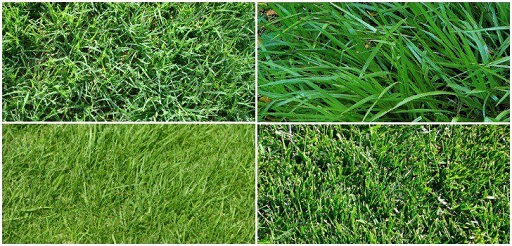 How to Properly Take Care of Your Lawn 3 Learn About the Local Grass Types - Copy