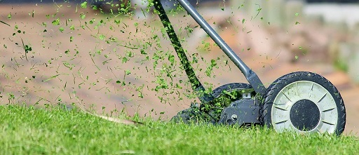How to Properly Take Care of Your Lawn 7