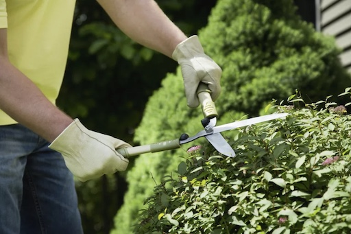 Top Ways to Keep Your Yard Neat 4 copy